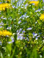 feild-flowers-1