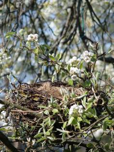 nest-in-tree