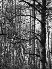 tree-w